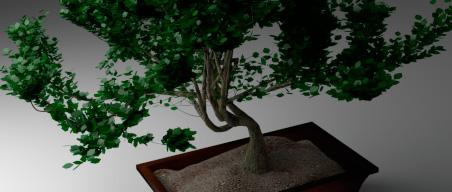 bonsai-preview