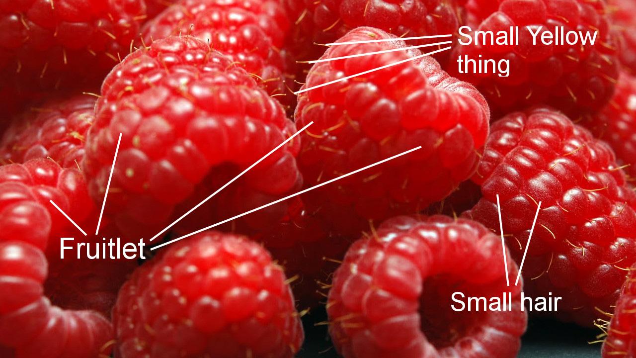 raspberries-0